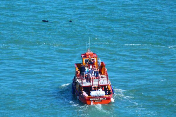 Dolphins Ahead!