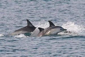 Dolphins in the bay!